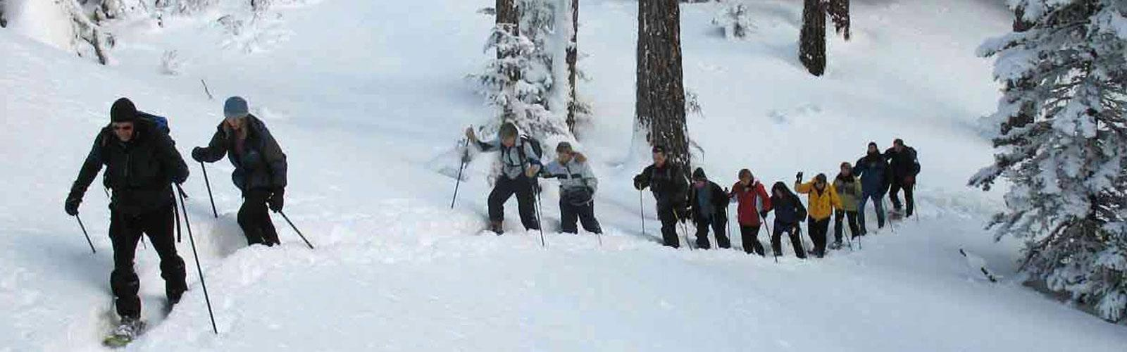 group of people hiking up through the woods in snowshoes.