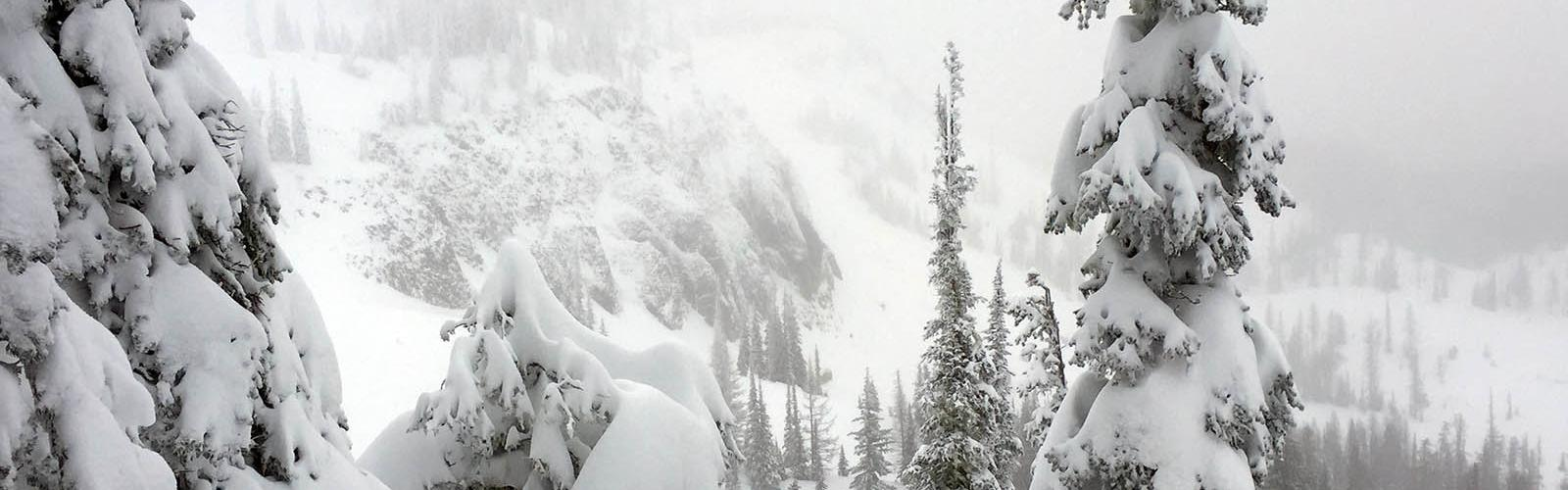 Snow covered trees with Bomber Cliffs behind