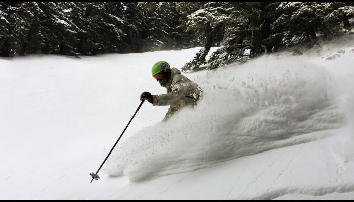 skier in deep powder with trees in background