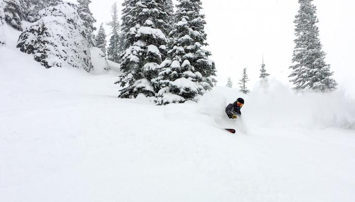 skier in powder snow with large snowy trees