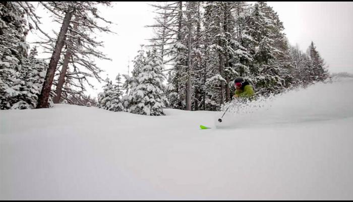 Skier making powder turn with snow covered trees behind