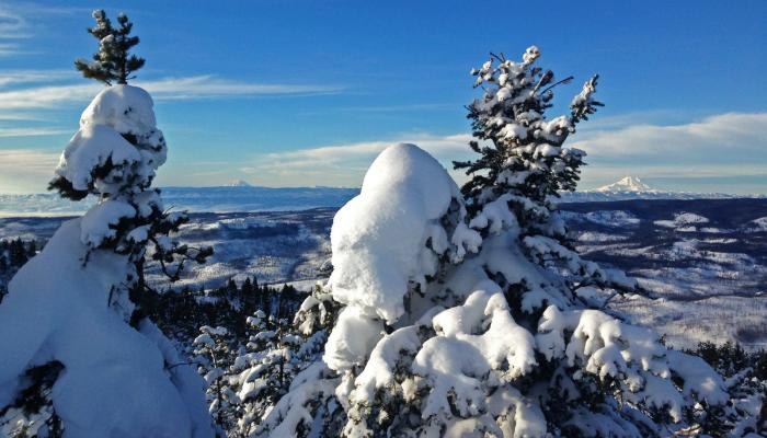 Trees covered in snow with Mt. Rainier and Mt Adams in background