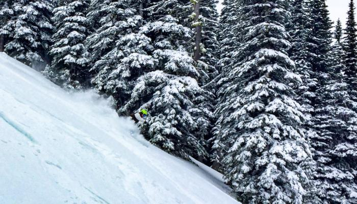 Skier in powder with snow covered trees behind